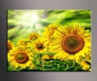 obrazy květiny 1D 120x50cm